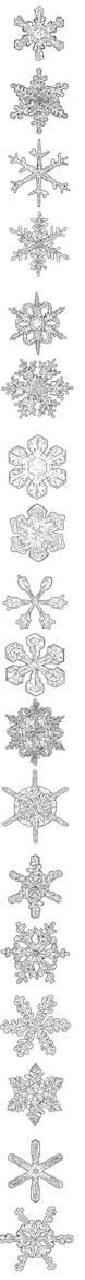 Snowflakes Illustration Drawing Engraving Ink 260Nw 738092569